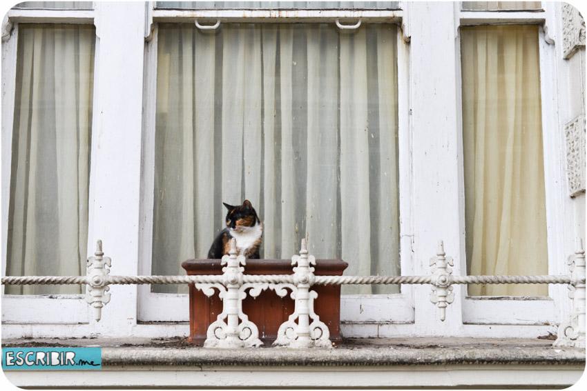 instrucciones-para-mirar-por-la-ventana-4